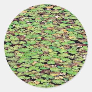 Flores franjadas del lirio de agua pegatina redonda