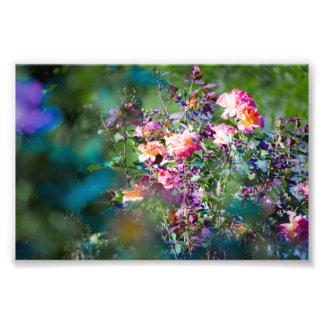 Flores frías cojinete