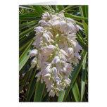 Flores gigantes de la yuca felicitaciones