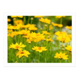 Flores Grande-Florecidas de Tickseed Postal