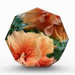 Flores hawaianas anaranjadas del hibisco