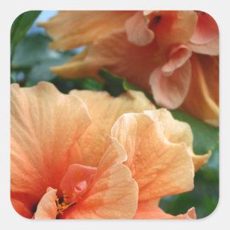 Flores hawaianas anaranjadas del hibisco pegatina cuadrada