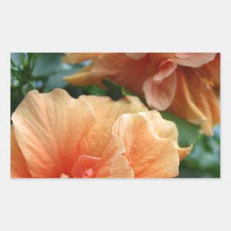 Flores hawaianas anaranjadas del hibisco pegatina rectangular