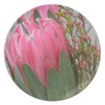 Flores hawaianas del Protea Platos
