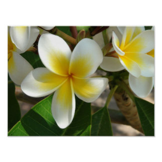 Flores hawaianas exóticas póster