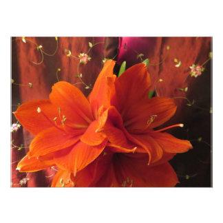 Flores hermosas del Amaryllis Cojinete
