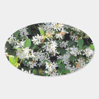 Flores hermosas del jazmín calcomanía ovalada