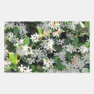 Flores hermosas del jazmín etiquetas