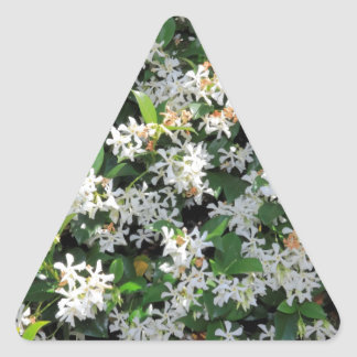 Flores hermosas del jazmín colcomanias de trianguladas