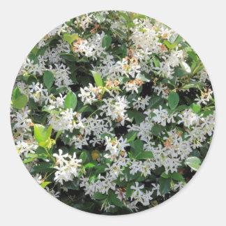 Flores hermosas del jazmín pegatina