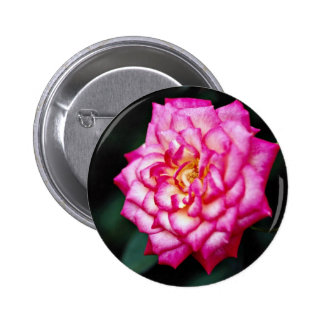 Flores híbridas del amarillo del rosa de té pins