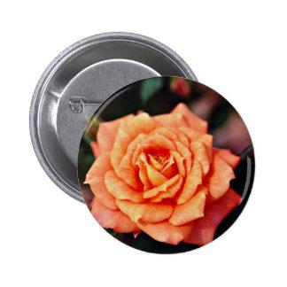 Flores híbridas del amarillo del rosa de té pin
