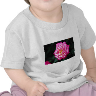 Flores híbridas del amarillo del rosa de té camisetas