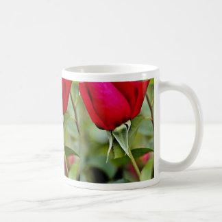 Flores híbridas del amarillo del rosa de té taza básica blanca