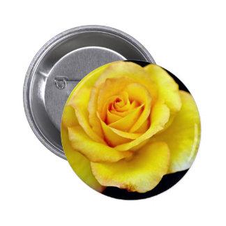 Flores híbridas del rosa de té pin