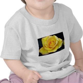 Flores híbridas del rosa de té camiseta