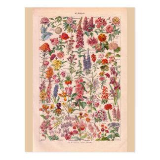 Flores históricas del vintage postales
