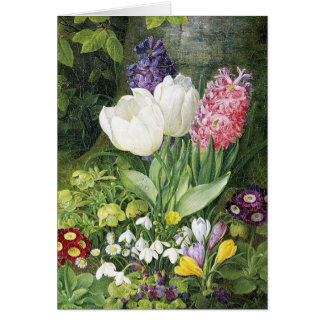 Flores holandesas de la primavera del bulbo tarjeta