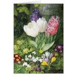 Flores holandesas de la primavera del bulbo tarjeta de felicitación