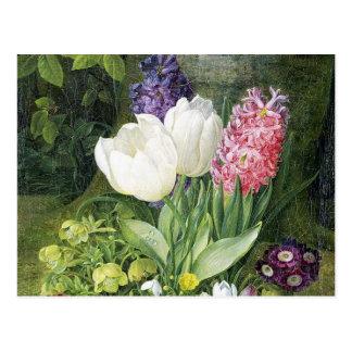 Flores holandesas de la primavera del bulbo tarjetas postales