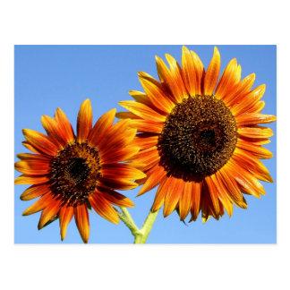 Flores increíbles del girasol de la belleza del ot postal