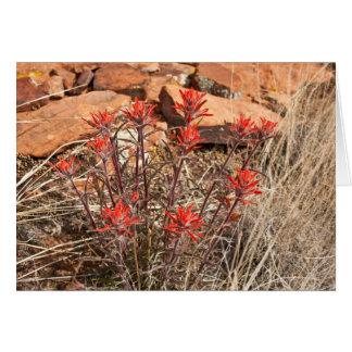 Flores indios de la brocha tarjeta de felicitación