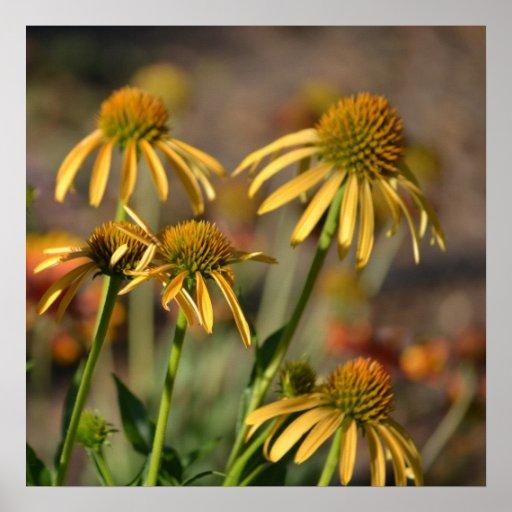 Flores inspiradas del Echinacea del amarillo del v Póster