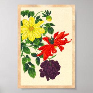 Flores japonesas orientales de las dalias de Nishi Poster