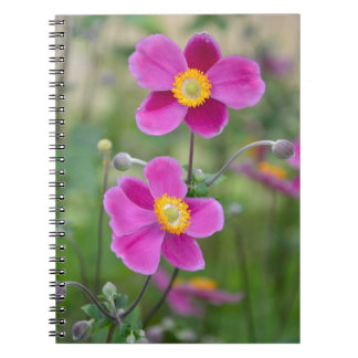 Flores japonesas rosadas de la anémona libro de apuntes con espiral