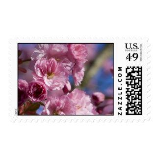 Flores japoneses de la flor sellos