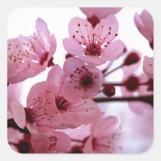 Flores japoneses del cerezo pegatinas cuadradases personalizadas
