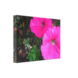 Flores magentas de la correhuela impresión en lienzo