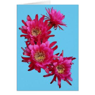 Flores magentas del cactus de erizo como tarjeta