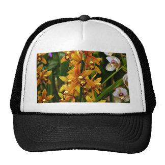 Flores marrones anaranjadas de la orquídea en la gorras