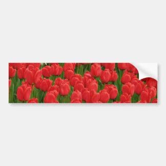 Flores mezcladas de los tulipanes etiqueta de parachoque