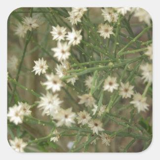 Flores miniatura del desierto calcomanía cuadrada personalizada