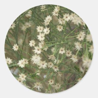 Flores miniatura del desierto etiquetas