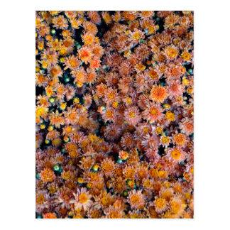Flores minúsculas (regalo) postales