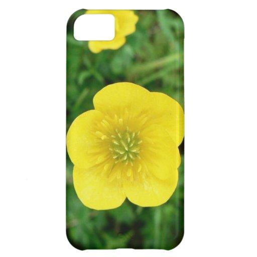 flores naturales Buttecup de la colección vol. 7