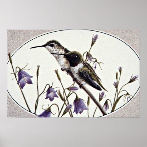 Flores Negras-chinned de los colibríes Póster