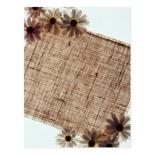Flores negras de la arpillera y de las margaritas tarjetas postales