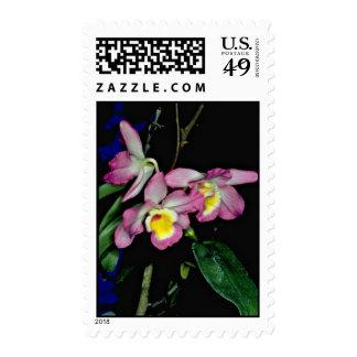 Flores nobile del Dendrobium Sello