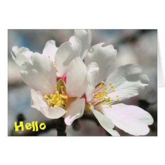 Flores Notecard del árbol de almendra Felicitación