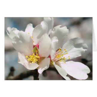 Flores Notecard del árbol de almendra Tarjetas