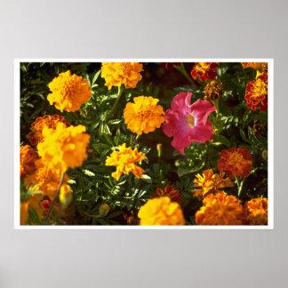 Flores para la adoración posters