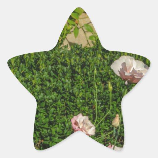 Flores Pegatina En Forma De Estrella