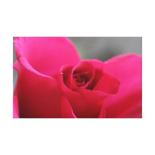 Flores perpetuas impresion en lona