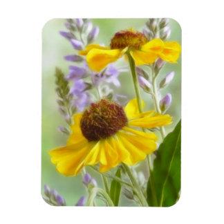 Flores pintadas del Helenium Imanes Rectangulares