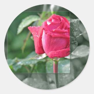 Flores por el lago - brote del rosa rojo etiquetas redondas
