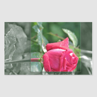 Flores por el lago - brote del rosa rojo rectangular pegatina